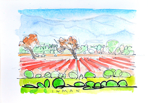 Santa Ynez Valley Winery Landscape Painting Bridlewood Watercolor