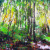Blacksburg Virginia Woods Landscape Painting